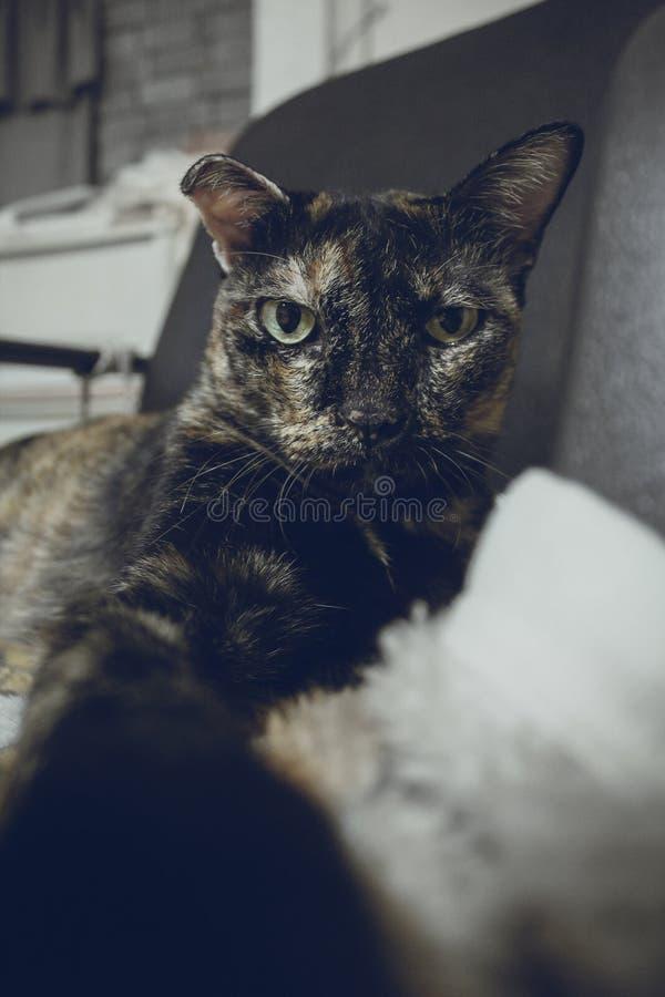 Un gatto nero sveglio che fa il ritratto del selfie nel tono d'annata del filtro fotografia stock libera da diritti