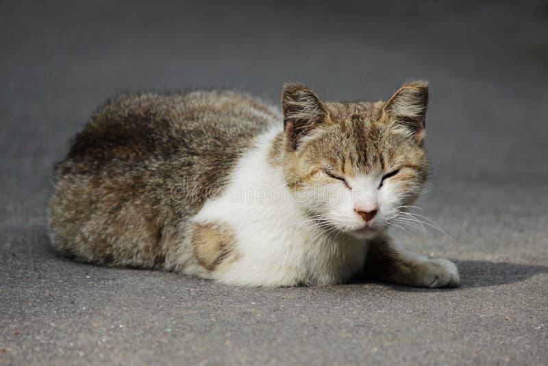 Un gatto senza tetto con le orecchie congelate si siede sulla via di estate fotografia stock