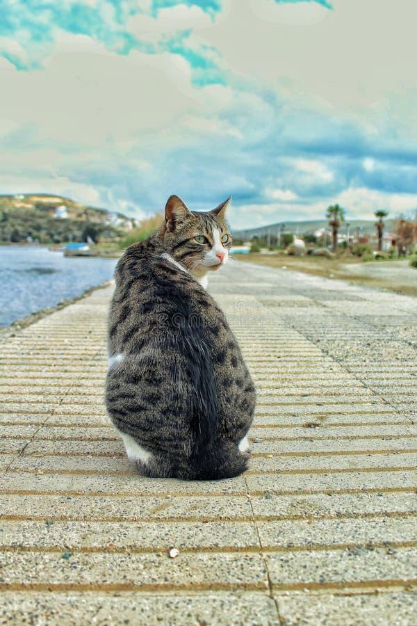 Un gatto sta guardando indietro il suo immagini stock libere da diritti