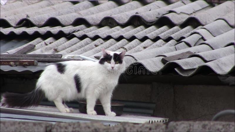 Un gatto sul tetto video d archivio