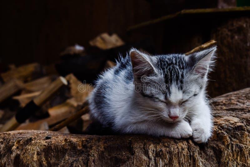 Un gatto sull'azienda agricola immagine stock