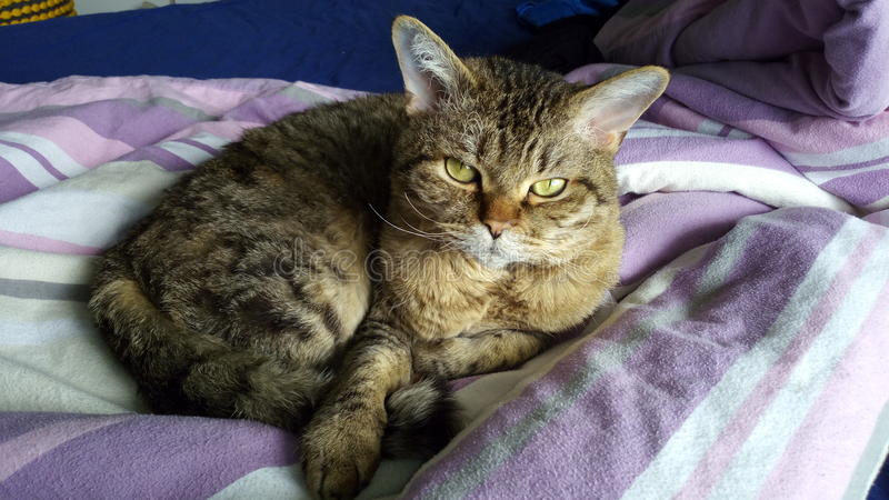 Un gatto sveglio fotografie stock libere da diritti