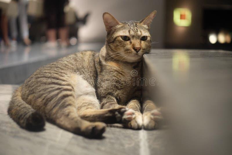 Un gatto sveglio che esamina qualcosa fotografia stock libera da diritti