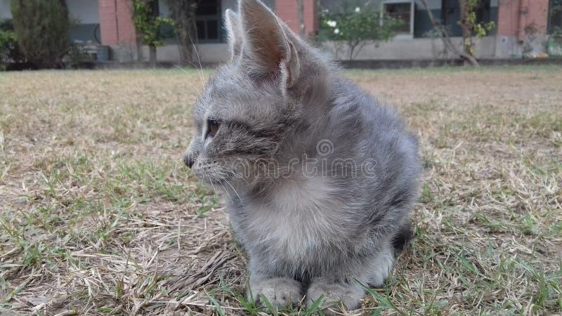Un gatto sveglio in giardino fotografia stock libera da diritti