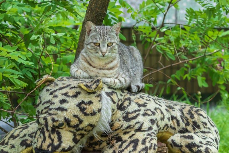 Un gatto sveglio si trova nel giardino su un giocattolo molle enorme e negli sguardi al fotografo fotografia stock