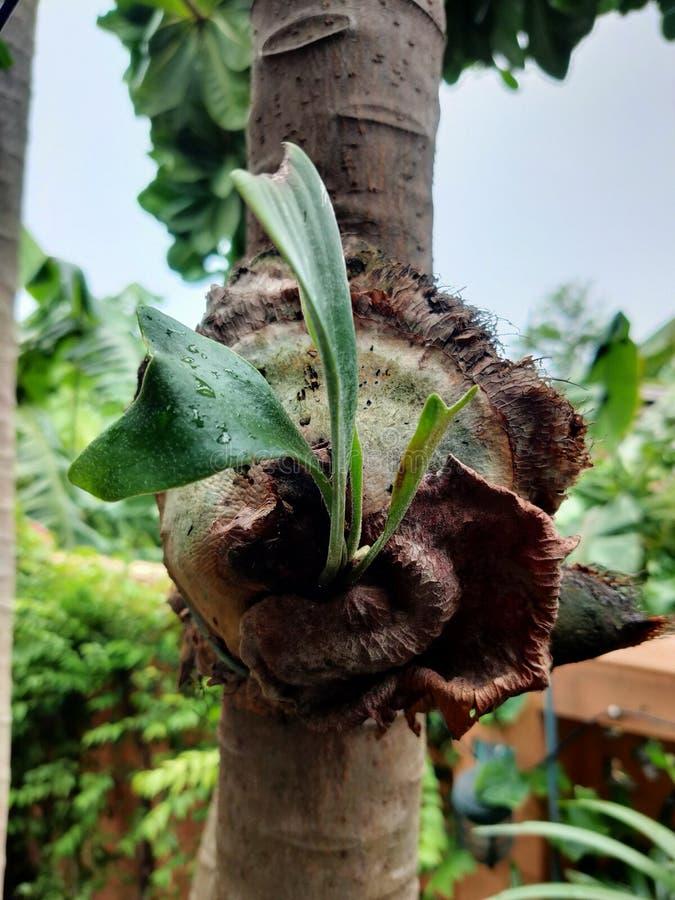 Un genre d'orchidée sauvage dans le toailand de Th, décorait le jardin photo stock