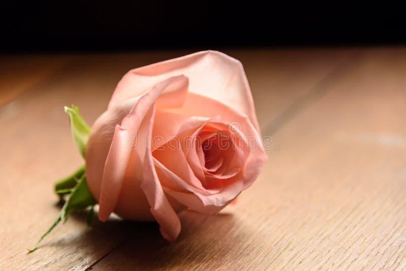 Un germoglio di un rosa è aumentato fotografia stock