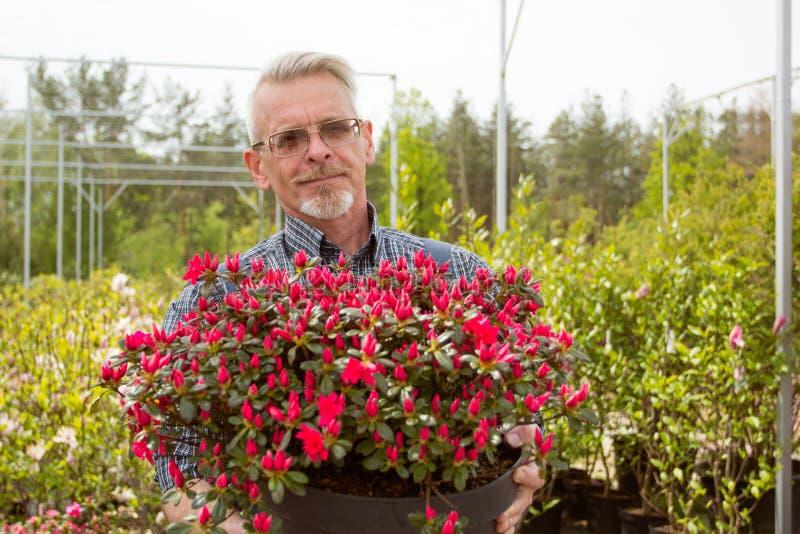 Un giardiniere che tiene un grande vaso con i fiori rossi fotografia stock