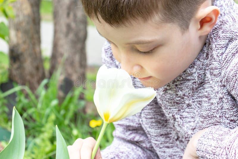 Un giardino bianco odorante del fiore del tulipano del ragazzo caucasico preteen in primavera immagine stock libera da diritti
