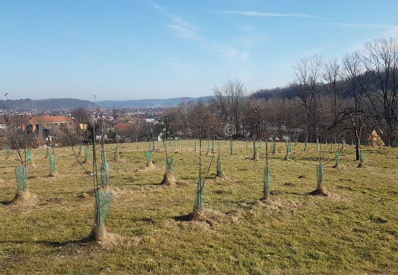 Un giardino degli alberelli di giovani alberi da frutto situati su una collina verde contro il contesto di un paesaggio pittoresc immagini stock libere da diritti