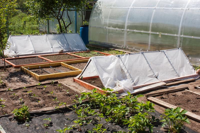 Un giardino piantato con le piante fotografia stock libera da diritti