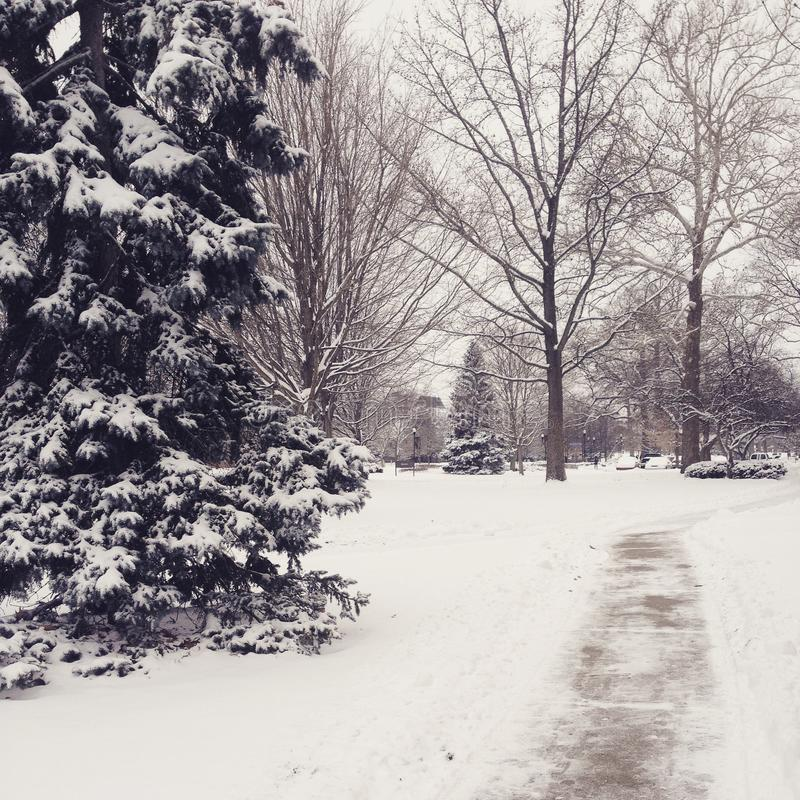Un giorno dell'inverno fotografia stock libera da diritti