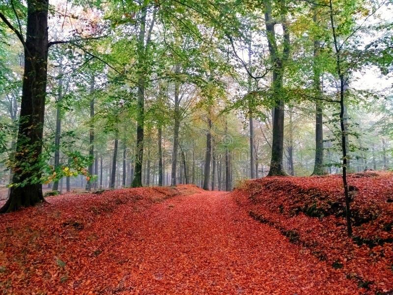 Un giorno di autunno in una foresta danese fotografie stock libere da diritti