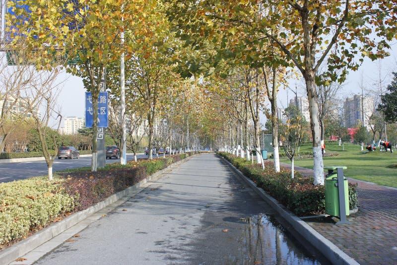 Un giorno soleggiato comune dopo pioggia e camminare lungo la strada con la vista speciale immagini stock