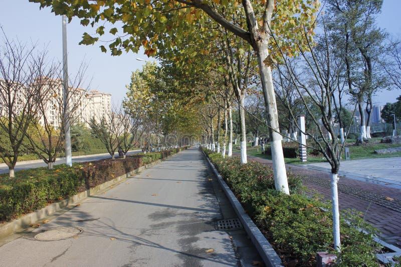 Un giorno soleggiato comune dopo pioggia e camminare lungo la strada con la vista speciale fotografia stock