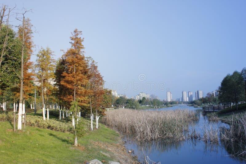 Un giorno soleggiato comune dopo pioggia e gli alberi che riflettono sul fiume pacifico blu fotografie stock