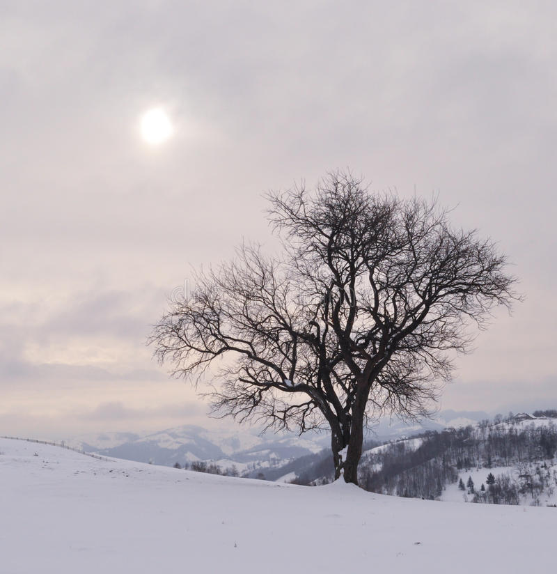 Un giorno soleggiato nel winer fotografia stock libera da diritti
