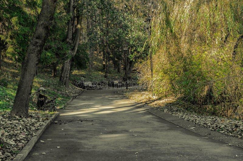 Un giorno soleggiato in un parco di autunno fotografia stock libera da diritti