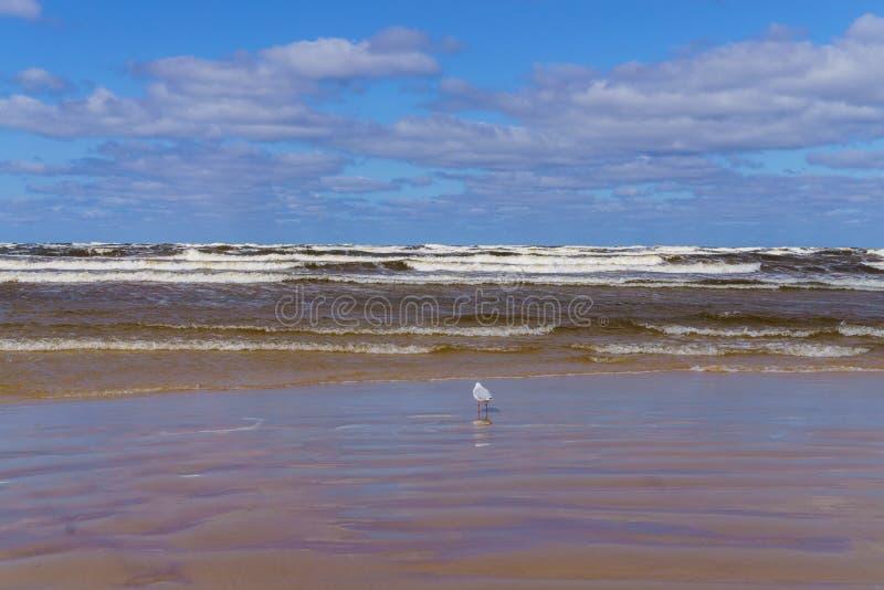 Un giorno ventoso sulla riva del golfo di Riga Jurmala, Lettonia fotografie stock libere da diritti