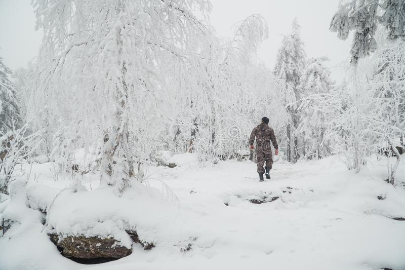 Un giovane che cammina in una foresta di inverno al bello giorno soleggiato, vista dalla parte posteriore fotografia stock libera da diritti