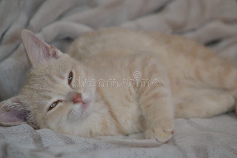 Un giovane gatto di colore della pesca sta trovandosi sul letto immagini stock