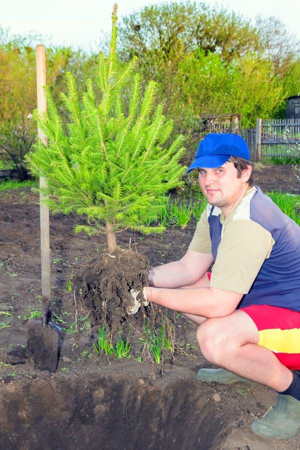 Un giovane uomo bello ha preparato un giovane pino in molla in anticipo per la piantatura sul suo diagramma immagine stock libera da diritti
