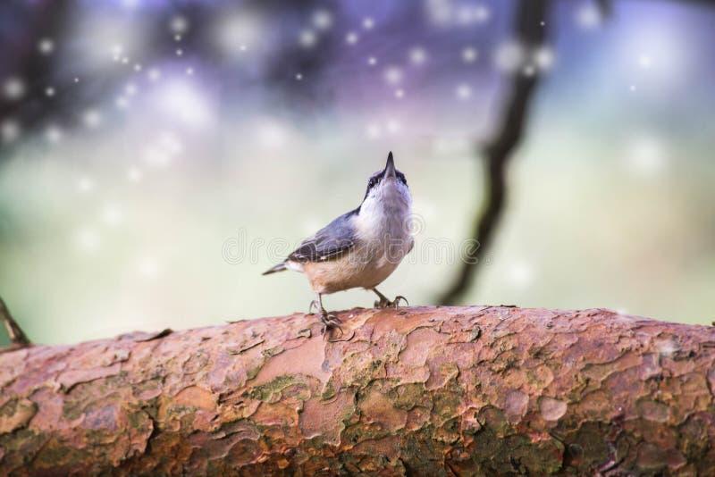Un gorrión vuela en el cielo y el fondo colorido del bokeh de la fantasía con un cuenco de la comida fotografía de archivo
