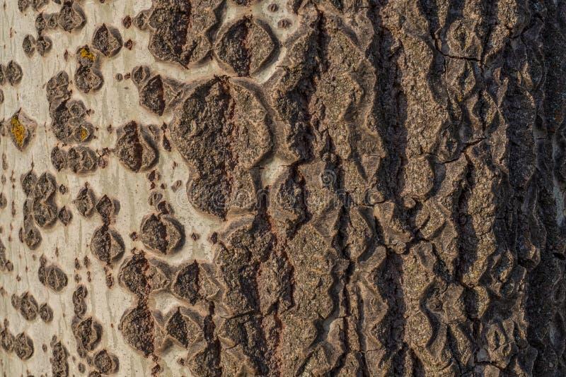 Un gradient naturel dans l'écorce d'un arbre photo stock