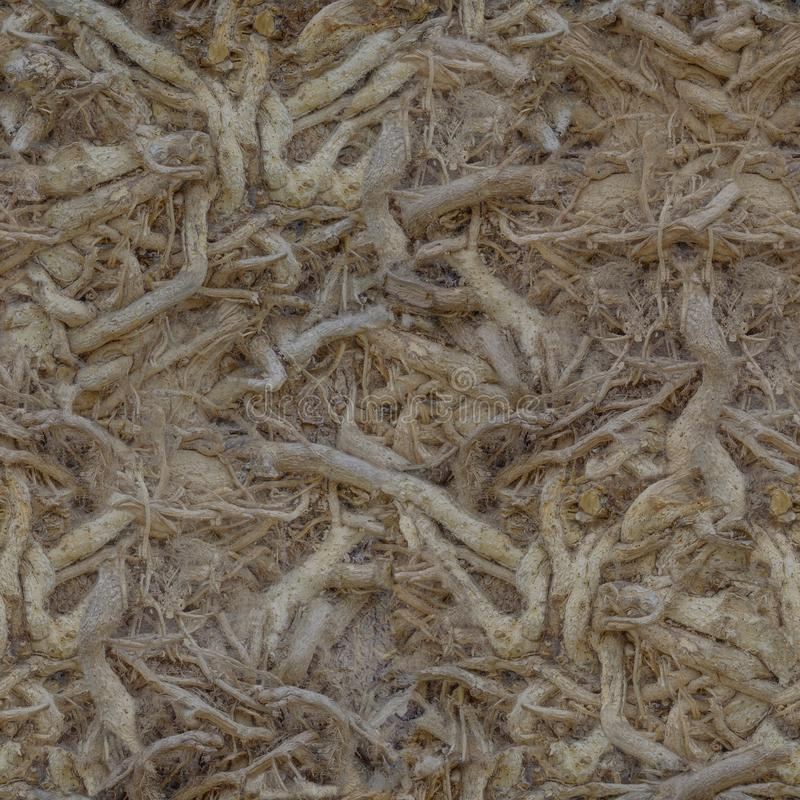 Un gran número de raíces entrelazadas del árbol en el lugar Textura o fondo foto de archivo