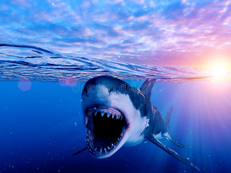 Un gran tiburón blanco libre illustration