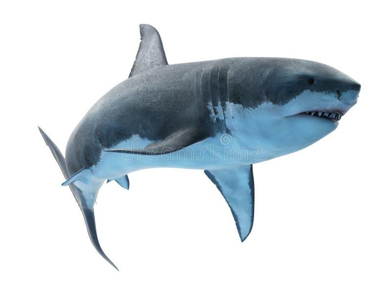 Un gran tibur?n blanco libre illustration