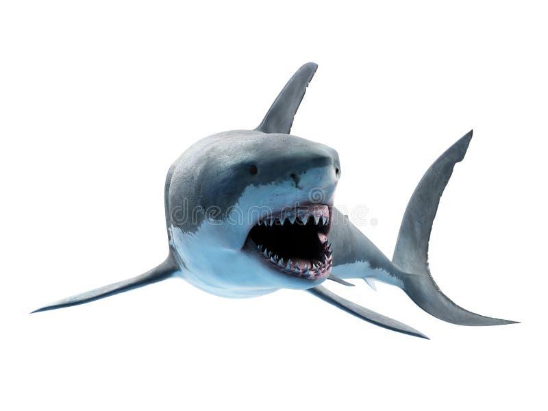 Un gran tibur?n blanco ilustración del vector