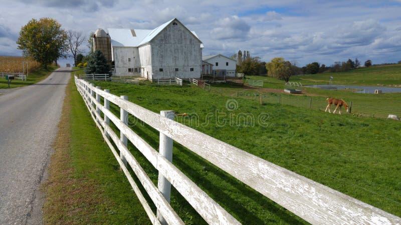 Un granaio tradizionale di Amish e una chiusura bianca in mezzo all'Ohio, U.S.A. fotografia stock libera da diritti