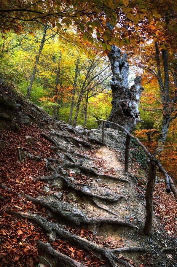 Un grand arbre dans la forêt 3 d'automne photographie stock