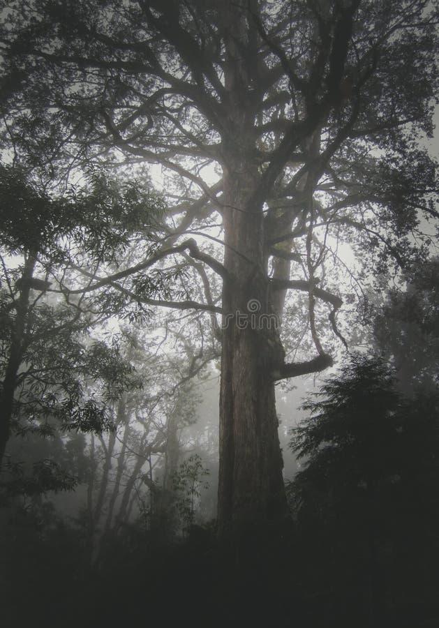 Un grand arbre de cèdre en montagne d'Ali photos libres de droits