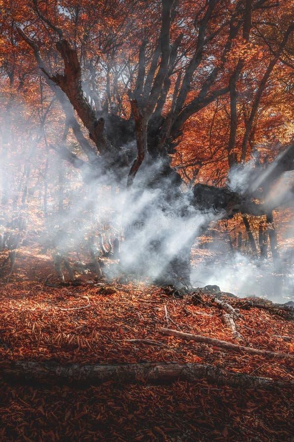 Un grand arbre en fumée Forêt d'automne Image pour illustrer les incendies photos stock