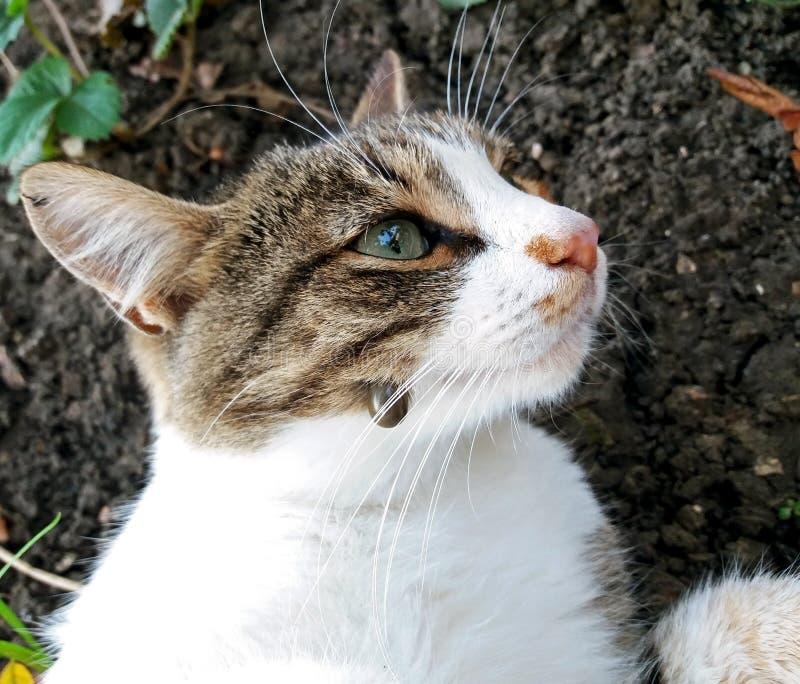 Un grand coutil dans un concept de chat images stock