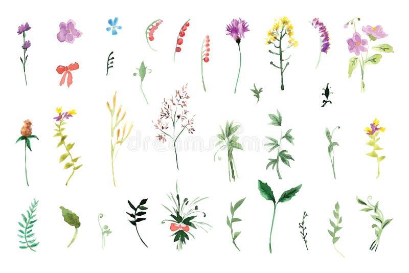 Un grand ensemble d'éléments d'usine - herbe, feuilles, baies, fleurs illustration de vecteur