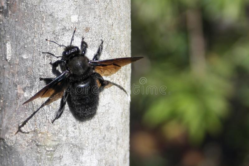 Un grand insecte photographie stock