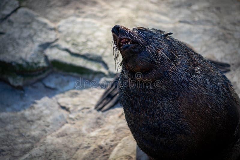 Un grand joint dans le zoo de Francfort photos libres de droits