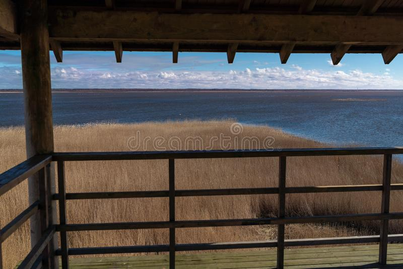 Un grand lac avec beaucoup de cygnes blancs photo libre de droits