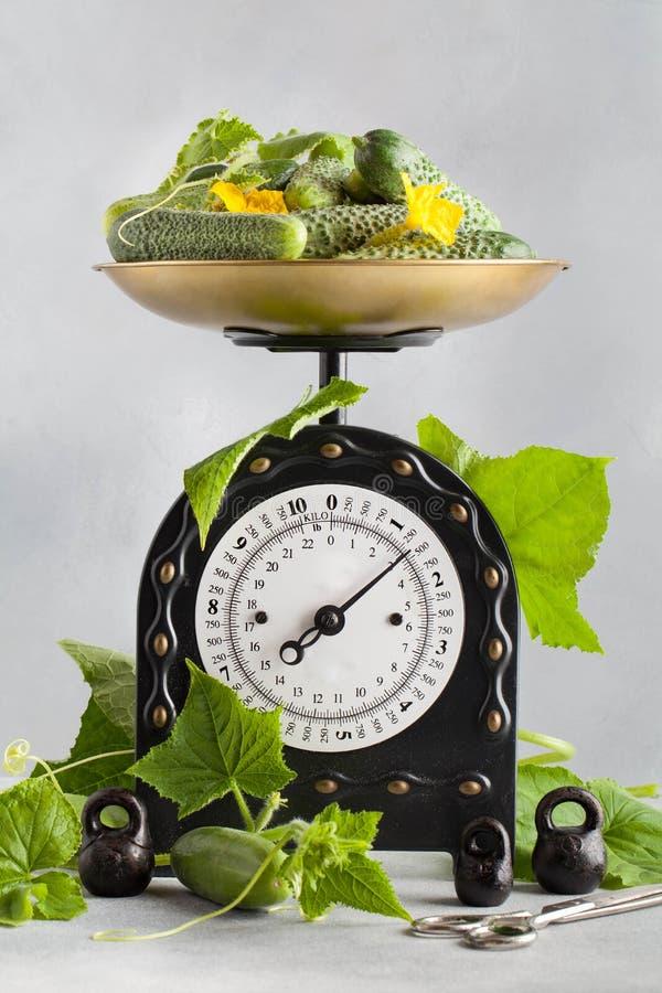 Un grand plat des concombres est sur l'échelle de cuisine images stock