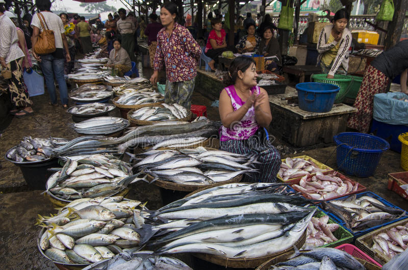 Un grand poisson MYANMAR - en BIRMANIE photos stock