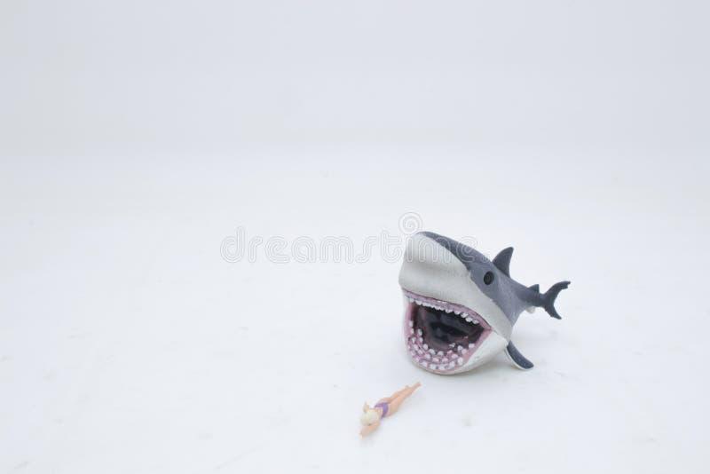 un grand requin blanc attaquant une femelle photo libre de droits