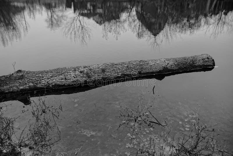Un grand rondin en bois gris se situe dans l'eau d'un réservoir images stock