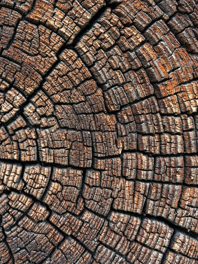 Un grand tronc d'arbre photo libre de droits