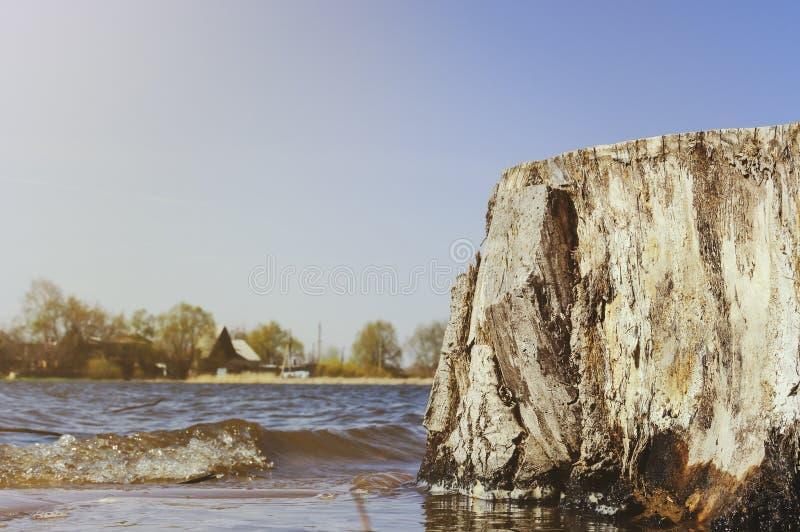 Un grand vieux tronçon texturisé dans la perspective d'une rivière un jour d'été image libre de droits