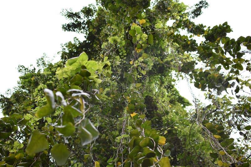 Un grande albero immagini stock libere da diritti