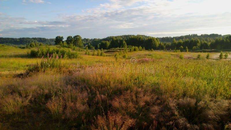 Un grande campo piacevole su una mattina di estate fotografia stock libera da diritti
