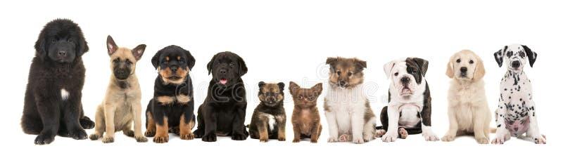 Un grande gruppo di genere differente dieci di cuccioli della razza immagine stock